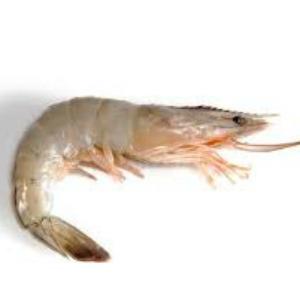 Pesce Gamberetti Vannamei Sg.Crudi 26/30 10x1kg