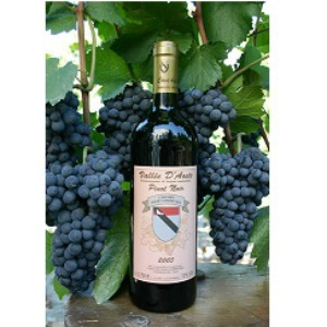 Vino Vda Onze Comm.Pinot Noir Doc 375ml